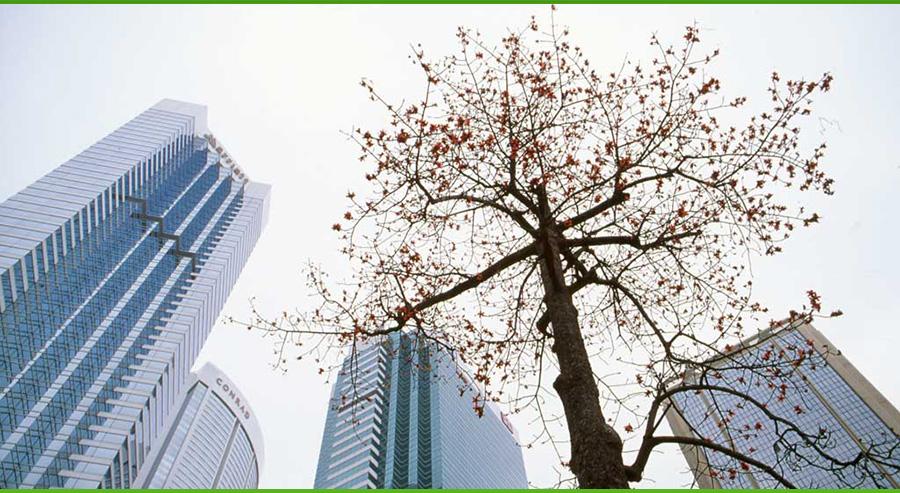 city-trees
